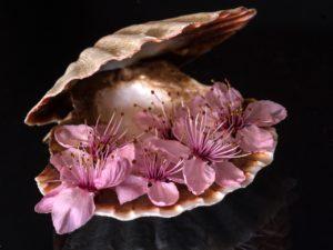 still life, shell, close up